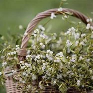 Fine Anno 2018 – inizio Anno 2019 Agriturismo in Maremma Toscana